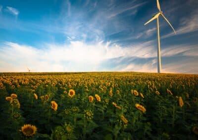 Podíl obnovitelných zdrojů na produkci elektřiny