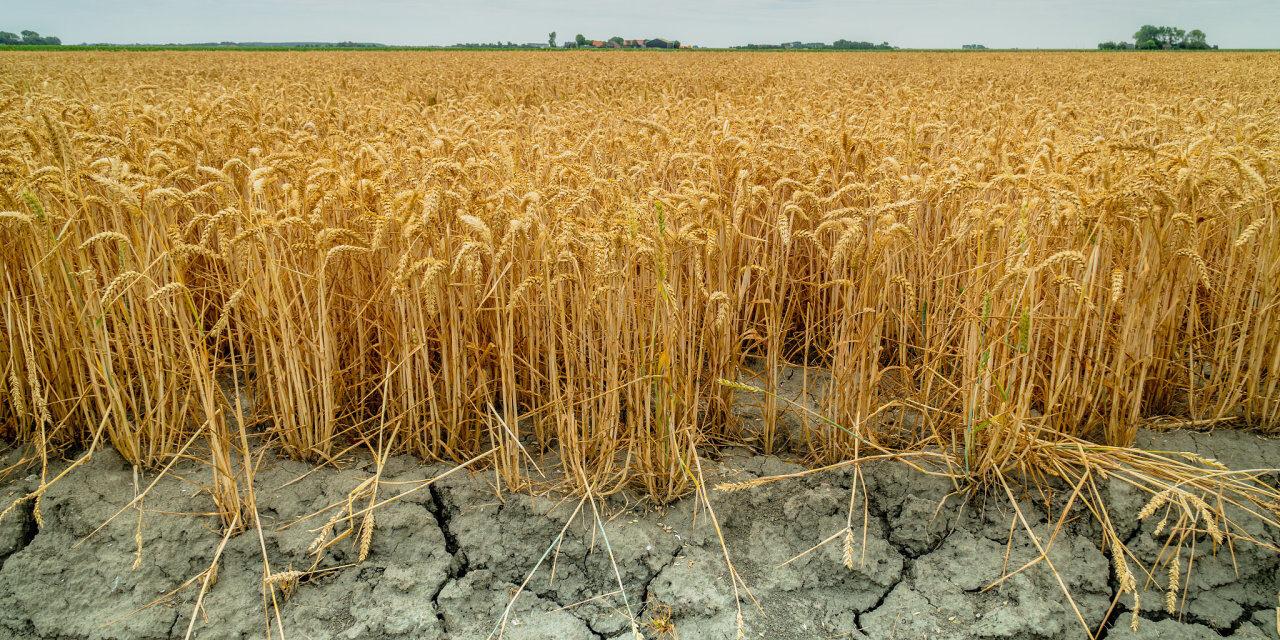 Česko je v boji s klimatickými změnami páté nejhorší v EU