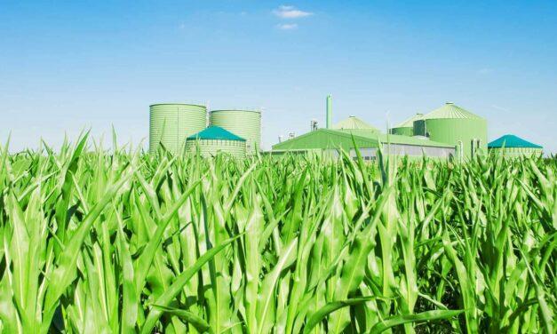Proč mají zelené investice stále smysl?